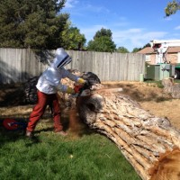 Swingle-Lawn--Tree-and-Landscape-Care-Helps-Save-Bee-Colony-002